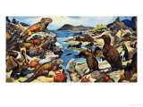 Unidentified Lizards, Birds, Crabs and Creatures on a Rocky Shoreline Giclee Print by G. W Backhouse