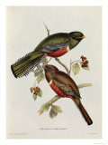 Trogon Collaris Giclee Print by John Gould
