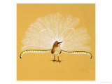 Lyre Bird Giclee Print