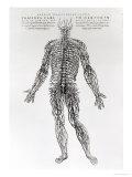 Nervensystem Giclée-Druck von Andreas Vesalius