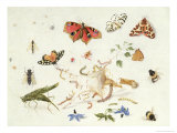 Study of Insects and Flowers Reproduction proc&#233;d&#233; gicl&#233;e par Ferdinand van Kessel
