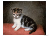 Miss Ann White's Kitten, 1790 Giclee Print by George Stubbs