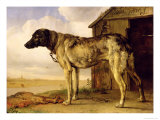 Dog on a Chain, 1653-4 Giclee Print by Paulus Potter