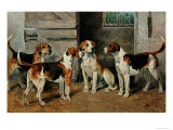 Study of Hounds Giclee Print by John Emms