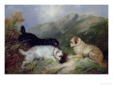 Terriers Rabbiting Giclee Print by Maxwell Armfield