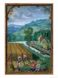 September: Harvesting, Ploughing and Sowing, from a Book of Hours, c.1540 Giclee Print by Simon Bening