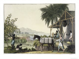 Cotton-Making, Dutch Antilles, East Indies, Le Costume Ancien ou Moderne, c.1820-30 Giclee Print by Paolo Fumagalli