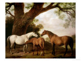 Two Shafto Mares and a Foal, 1774 Giclee Print by George Stubbs