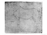 Study of a Horse Giclee Print by  Leonardo da Vinci