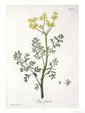Rue from Phytographie Medicale by Joseph Roques Giclee Print by L.f.j. Hoquart