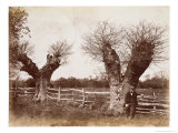 Hedgerow Tree, 1852 Reproduction procédé giclée par Benjamin Brecknell Turner
