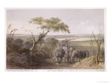 Herd of Elephants on the Border of Chad, Travels and Discoveries in North and Central Africa Giclee Print by Johann Martin Bernatz