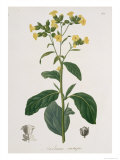 Nicotiana from Phytographie Medicale by Joseph Roques Giclee Print by L.f.j. Hoquart