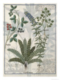 Ferns, Brambles and Flowers, Illustration from the Book of Simple Medicines by Platearius Giclee Print by Robinet Testard
