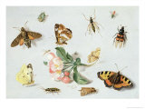 Butterflies, Moths and Other Insects with a Sprig of Apple Blossom Giclee Print by Jan Van, The Elder Kessel