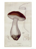Boletus Edulis, Illustration For an Edition of Traite Des Champignons by Jean Jacques Paulet Giclee Print by Paul Louis Oudart
