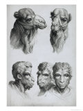 Similarities Between the Head of a Camel and a Man Giclee Print by Charles Le Brun
