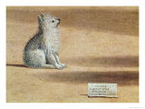 Vision of St. Augustine, Detail of the Dog, 1502-08 Giclée-tryk af Vittore Carpaccio
