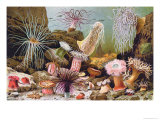 Sea Anemones, from a Hungarian Natural History Book, c.1900 Giclee Print by Alfred Brehm