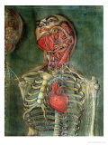 Throat and Heart, Plate Anatomy of the Visceras, Dissected, Painted and Engraved by Gautier, 1745 Giclee Print by Jacques Fabien Gautier d'Agoty
