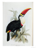 Red-Billed Toucan, from A Monograph of the Ramphastidae, or Family of Toucans, by John Gould Giclée-Druck von Edward Lear
