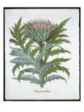 The Cardoon, from the Hortus Eystettensis by Basil Besler Giclee Print