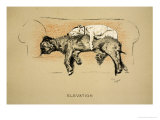 Elevation, 1930, 1st Edition of Sleeping Partners Giclee Print by Cecil Aldin