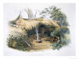 Aboriginal Inhabitants, Portland Bay, Cold Morning and Amily from South Australia Illustrated, 1847 Giclee Print by George French Angas