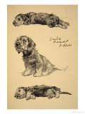 Dandie Dinmont Puppies, 1930, Just Among Friends, Aldin, Cecil Charles Windsor Giclee Print by Cecil Aldin