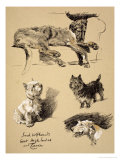 Irish Wolfhound, West Highlander and Cairn, 1930, Just Among Friends, Aldin Giclee Print by Cecil Aldin