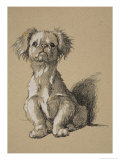 Peke, 1930, Ifrom His Sketch Book Used For Just Among Friends, Aldin, Cecil Charles Windsor Giclee Print by Cecil Aldin