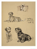 Bull Terrier, Dalmatians and Mutt Dog, 1930, Just Among Friends, Aldin, Cecil Charles Windsor Giclee Print by Cecil Aldin