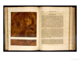 Birds Eye Maple, Plate XIII from Imitation of Wood, 1827 Giclee Print by Nathaniel Whittock