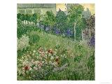 Daubigny's Garden, 1890 Giclee Print by Vincent van Gogh