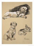 Terriers, 1930, Just Among Friends, Aldin, Cecil Charles Windsor Giclee Print by Cecil Aldin