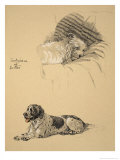 Sealyham and Setter, 1930, Just Among Friends, Aldin, Cecil Charles Windsor Reproduction procédé giclée par Cecil Aldin