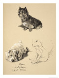 Cairn, Sealyham and Bull Terrier, 1930, Just Among Friends, Aldin, Cecil Charles Windsor Giclee Print by Cecil Aldin