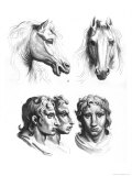 Similarities Between the Heads of a Horse and a Man Giclee Print by Charles Le Brun