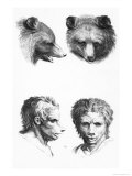 Similarities Between the Head of a Bear and a Man Giclee Print by Charles Le Brun
