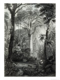 Scene in a Brazilian Forest Engraved by J.Bishop Giclee Print by Henry George Hine