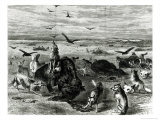 Slaughter of Buffaloes on the Plains, from Harpers Weekly 1872 Giclee Print by Theodore Russell Davis