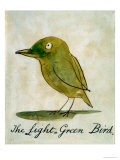 The Light Green Bird, from Sixteen Drawings of Comic Birds Giclee Print by Edward Lear