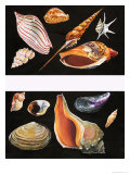 All Sorts of Sea Shell, Illustration from Once Upon a Time, 1970 Giclee Print