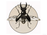 The Stag Beetle Giclee Print by R. B. Davis