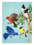 Brightly Coloured Birds Giclee Print by R. B. Davis