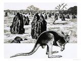Large Termite Mounds Near Darwin, Australia, and a Kangaroo in Foreground Giclee Print