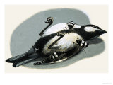 Dead Bird Being Eaten by Beetles Giclee Print by R. B. Davis
