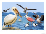Birds with Strange Beaks Giclee Print by R. B. Davis