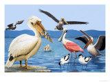 Birds with Strange Beaks Giclee Print by R. B. Davis