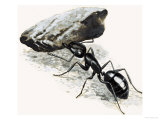 Little Monsters: The Mighty Ant Giclee Print by R. B. Davis